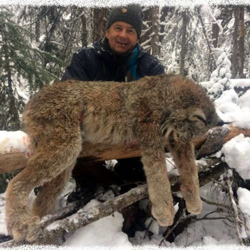 Zbigniew was also able to harvest this beautiful lynx on his cat hunt this December.